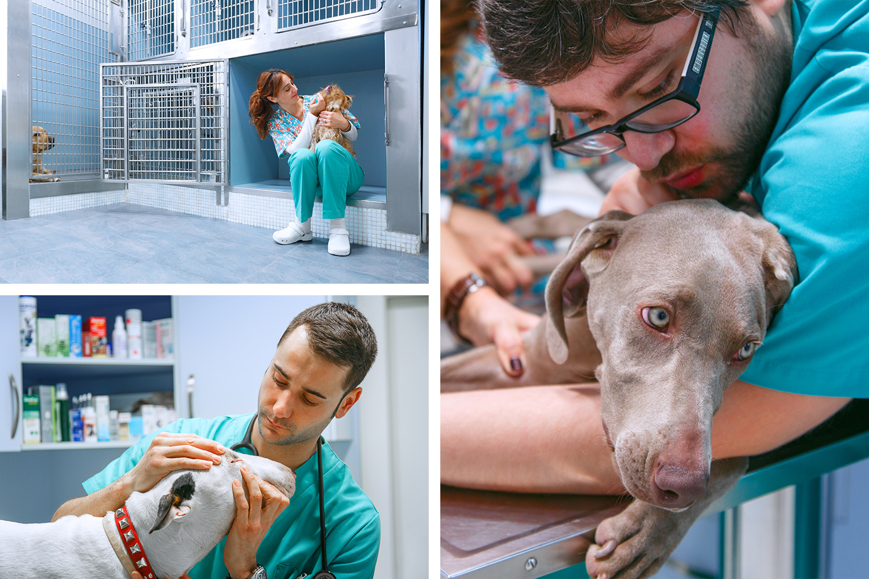 veterinarios trabajando
